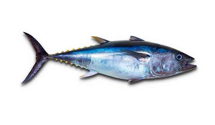 Sazón Sula Aula Culinaria | Familia de los Peces | Atún