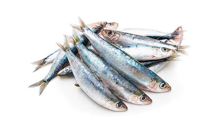 Sazón Sula Aula Culinaria | Familia de los Peces | Sardinas