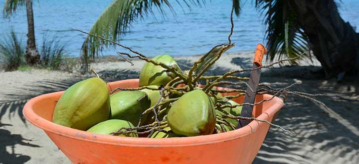 Sazón Sula   El coco en la comida Garífuna