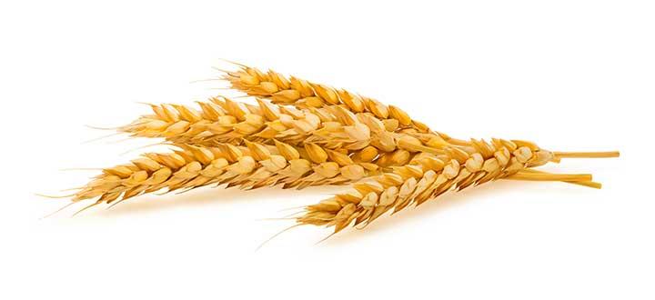 Sazón Sula   El trigo en la comida Garífuna