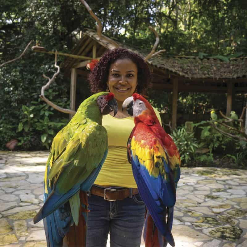 Guacamayas rojas y verdes, el ave oficial de Honduras esta en Copán Ruinas