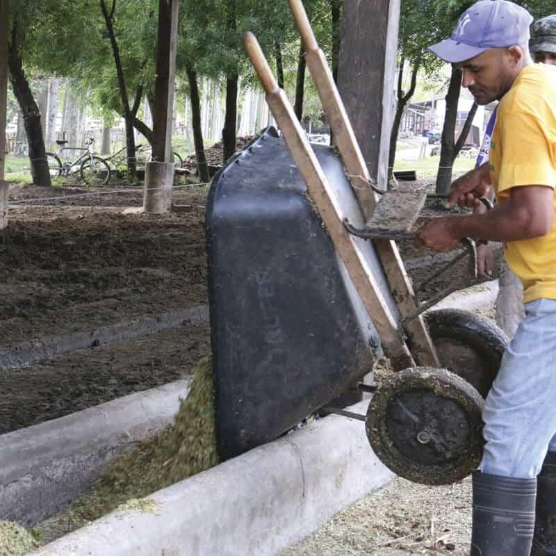 Sazón Sula | Sazón de la calle el proceso de la leche