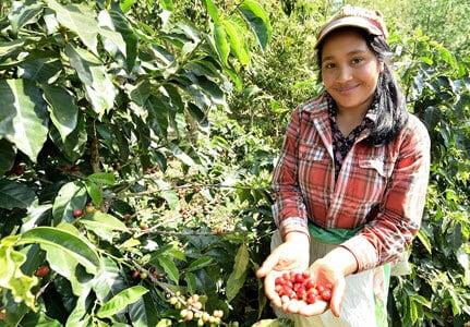 El café hondureño una pasión que que todos compartimos